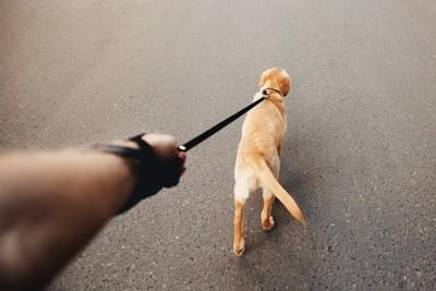 引っ張って歩く犬の後ろ姿