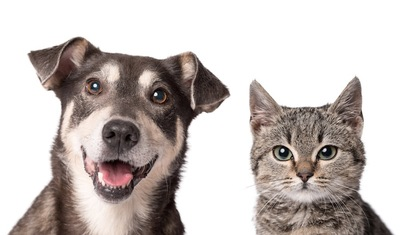 並んでこちらを見つめる猫と犬