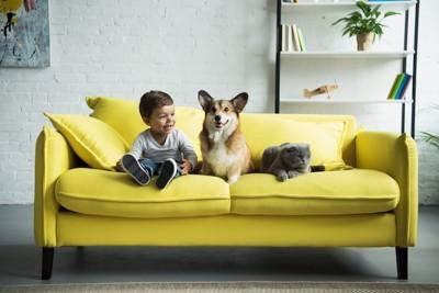 ソファーの上の男の子と犬と猫