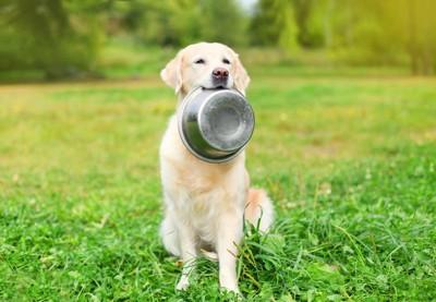 餌の皿をくわえている犬