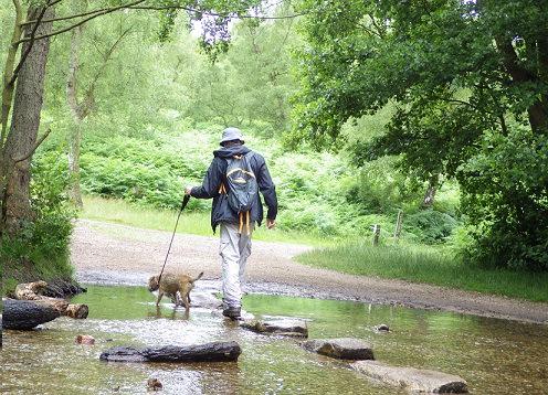 小川を散歩する犬
