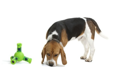 おもちゃとビーグル