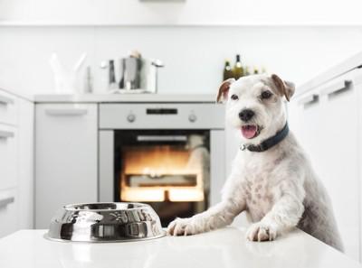 オーブン使う犬