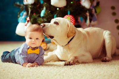 赤ちゃんの頭にキスする犬