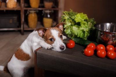 台所にある食べものを見ている犬