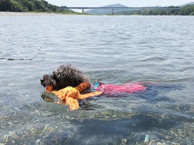 泳いでいるエマさん1