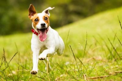 飛びつく犬