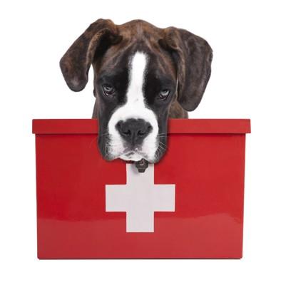 救急箱とボクサー犬