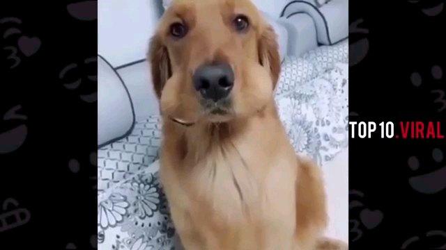 頬の膨らんだ犬