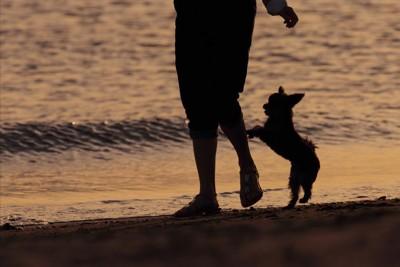 海辺で遊ぶ飼い主と犬
