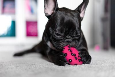 おもちゃで遊ぶ黒い犬