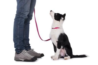 飼い主の指示でおすわりをしている犬
