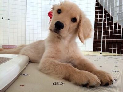 首をかしげる愛犬