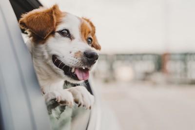 窓から顔を出す笑顔の犬