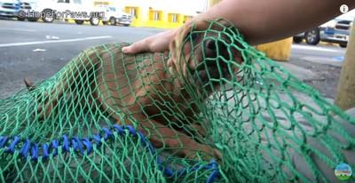 網でとらえられた犬