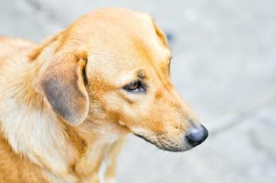 顔をそらしている犬