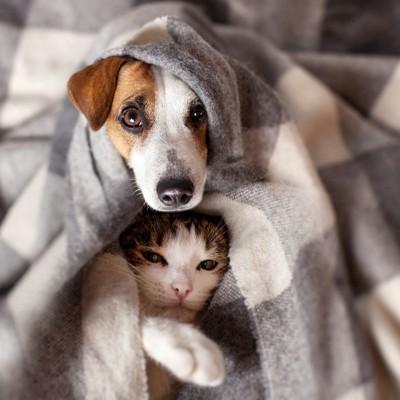 毛布をかぶる犬と猫
