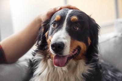 頭をなでられる犬