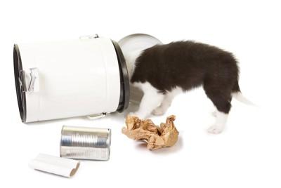 ゴミ箱を倒して顔を突っ込む犬