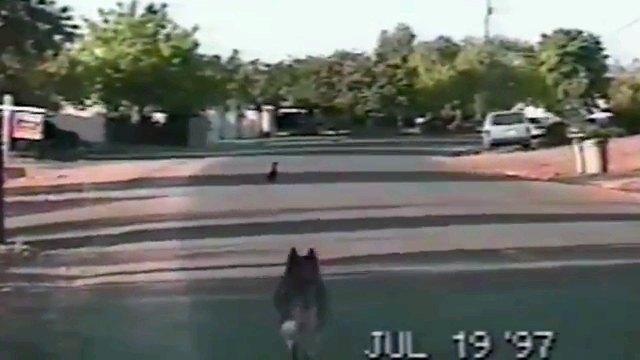 犬の後ろ姿と鴨