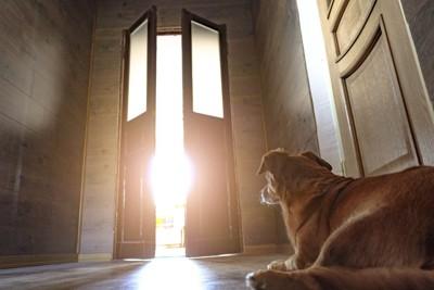 玄関で飼い主を待つ犬と開く扉