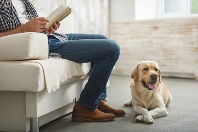 男性の足元に伏せ座りをする犬