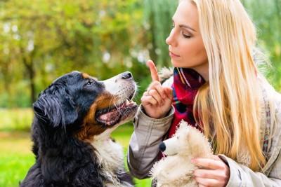 犬に指示を出す女性と真剣な表情の犬