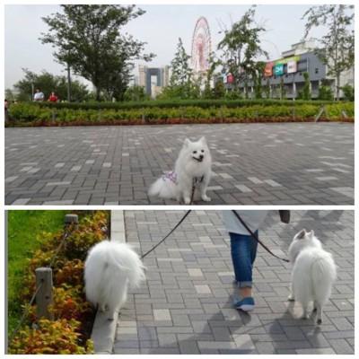 植え込みの脇の道を歩く犬