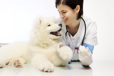 微笑む獣医師とサモエド