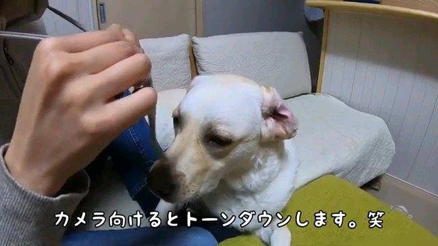 カメラ~字幕