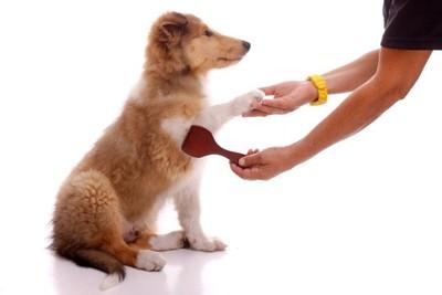 犬のブラッシングをしている手