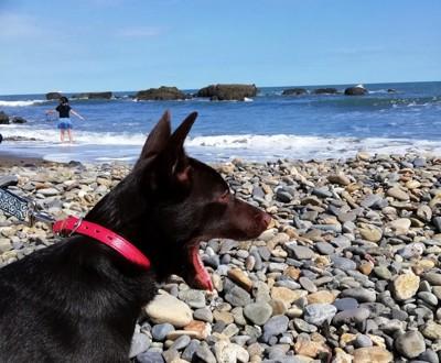 海を見て大きな口を開ける犬