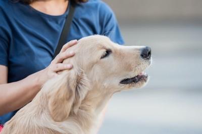 女性に頭を撫でられている犬