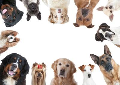 円になった12匹の犬