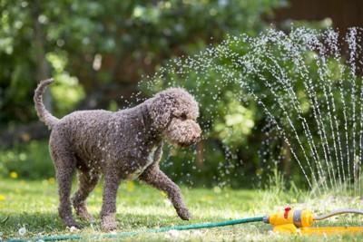 犬とシャワーホース