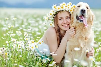 お花畑にいるゴールデンと女の子