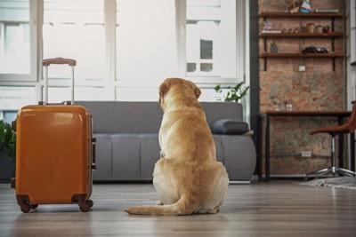 スーツケースの横に座る犬の後ろ姿