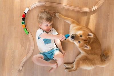 おもちゃの電車で遊ぶ男の子と柴犬