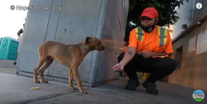 職員に近づく犬