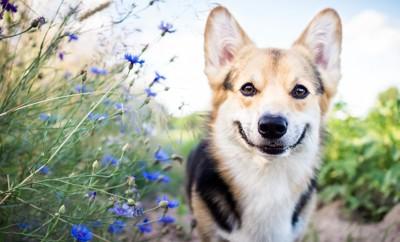 花の横で笑う犬