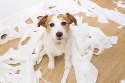トイレットペーパーをグチャグチャにする犬