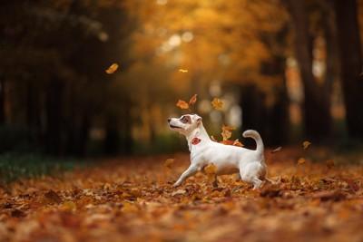 落ち葉で遊んでいる犬