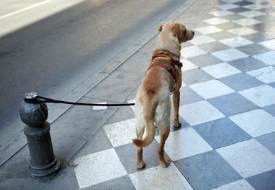 繋がれている犬の後ろ姿