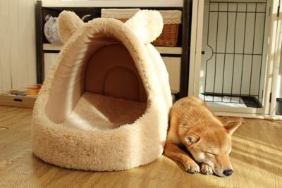 ベッドの横で眠る柴犬