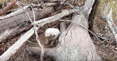 枯木の横に白い犬