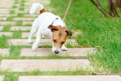 リードを引っ張られて踏ん張る犬