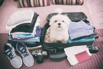旅行バックの中に入る犬
