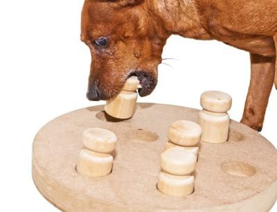 #パズルで遊ぶ犬#