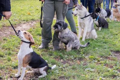 グループレッスン中の犬たち
