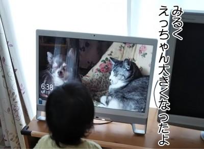 PCを眺めるえっちゃん